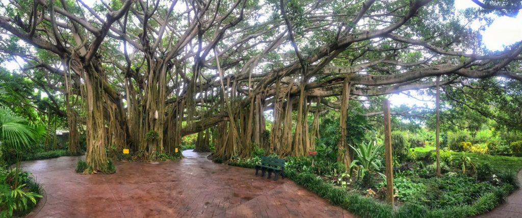 LEGOLAND Florida with Young Kids: Exploring Cypress Gardens